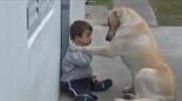 Labrador_agori-syndromo-daun
